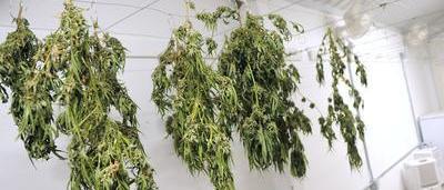 Outre Les 135 Grammes De Cannabis On A Galement Retrouv Une Carte SIM Quelle Comptait Probablement