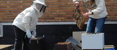 apiculteur quaregnon